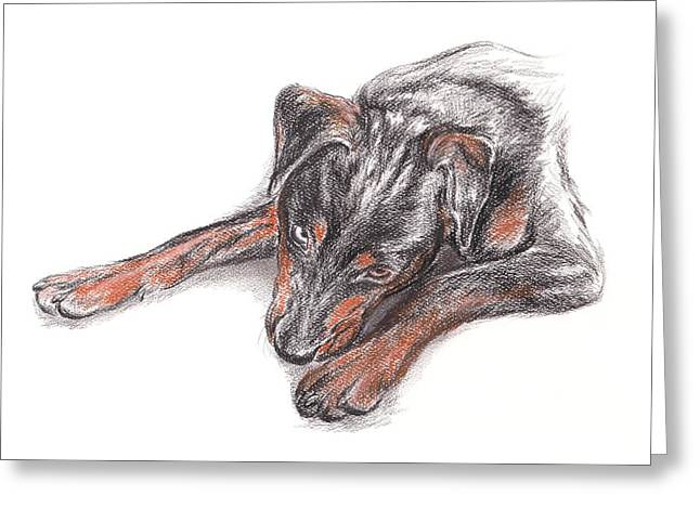 Huskies Drawings Greeting Cards - Young Black Dog Portrait Greeting Card by MM Anderson