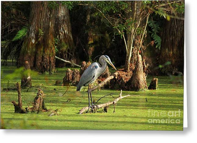 Young Blue Heron Greeting Card by Theresa Willingham