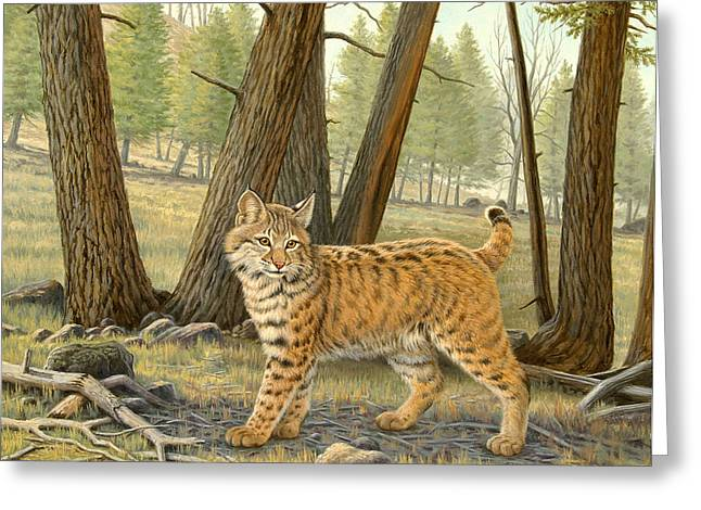 Bobcats Greeting Cards - Young Bobcat    Greeting Card by Paul Krapf