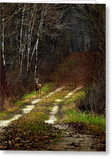 Tommytroutphoto Greeting Cards - Young Buck and Autumn Greeting Card by Thomas Young
