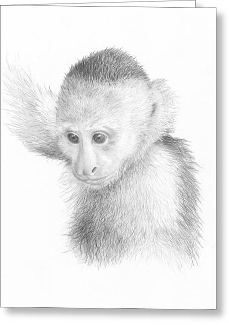Costa Drawings Greeting Cards - Young Capuchin Greeting Card by Diane Cardaci