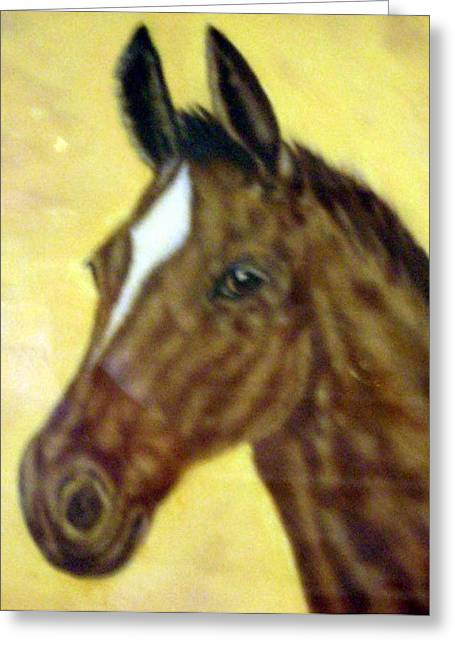 Pat Mchale Greeting Cards - Young Colt Greeting Card by Pat Mchale