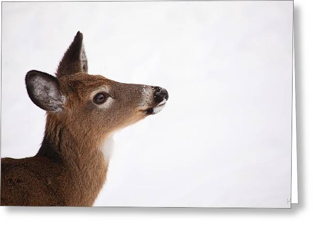 Deer In Snow Greeting Cards - Young Deer in Winter Greeting Card by Karol  Livote