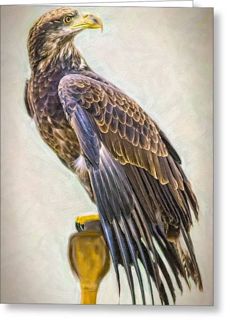African-american Greeting Cards - Young Eagle - Painting Greeting Card by F Leblanc