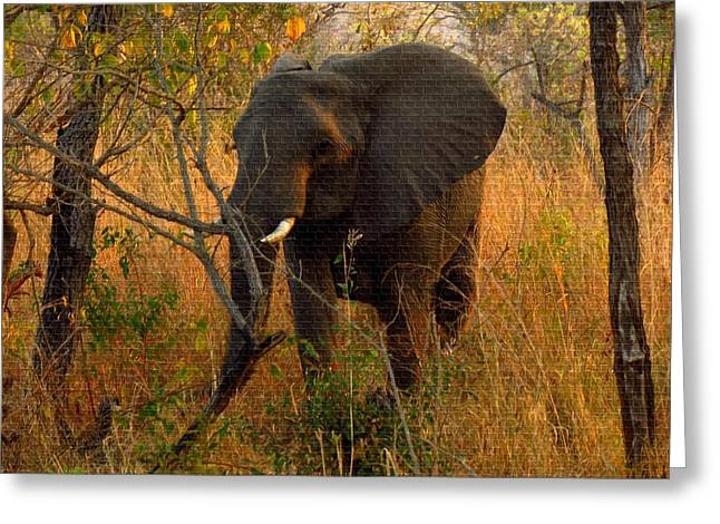 Commercial Photography Paintings Greeting Cards - Young Elephant  H b Greeting Card by Gert J Rheeders