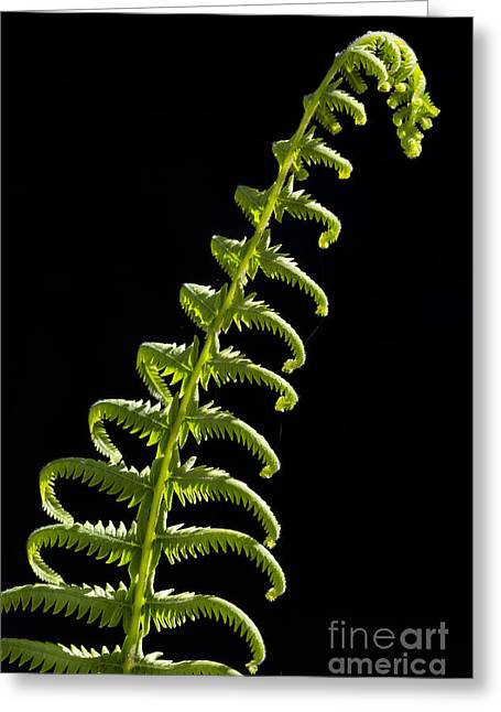 Young Fern Egan's Creek Greenway Florida Greeting Card by Dawna  Moore Photography