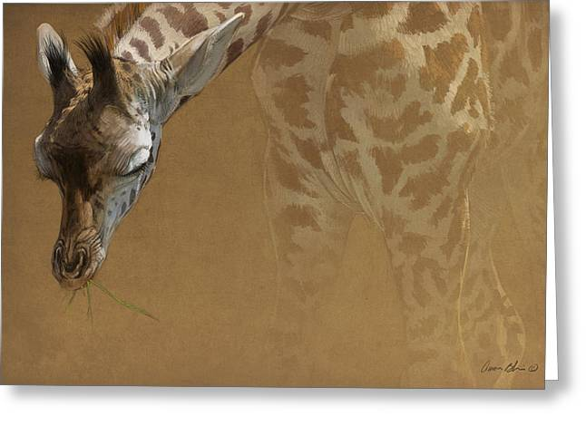 Blaise Greeting Cards - Young Giraffe Greeting Card by Aaron Blaise