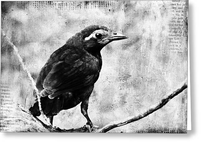 Young Grackle Greeting Card by Cassie Peters