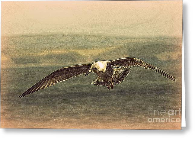 Sennen Greeting Cards - Young gull Greeting Card by Linsey Williams