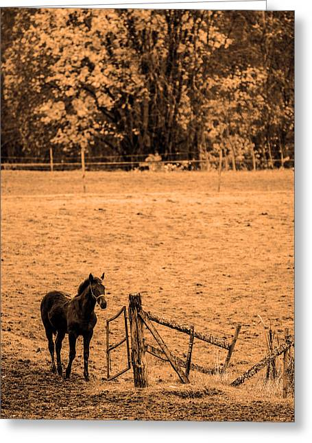 Equestrianism Greeting Cards - Young horse Greeting Card by Toppart Sweden