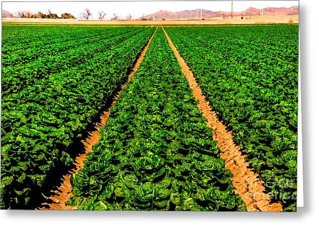 Young Lettuce Greeting Card by Robert Bales
