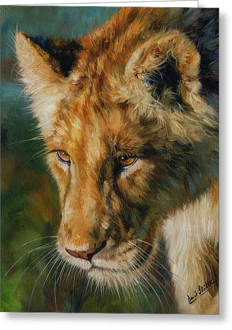 Lions Greeting Cards - Young Lion Greeting Card by David Stribbling