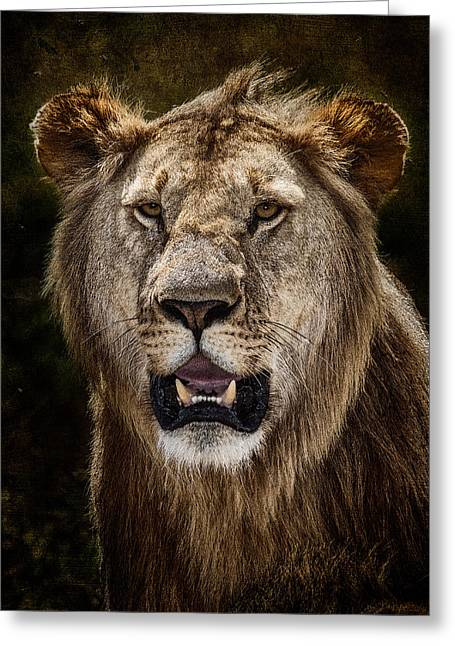 African Inspired Art Greeting Cards - Young Male Lion Texture Blend Greeting Card by Mike Gaudaur