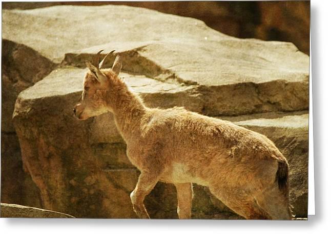 Goat Photographs Greeting Cards - Young Markhor Goat Greeting Card by Dan Sproul