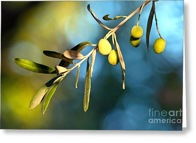 Olive Garden Greeting Cards - Young Olive On A Branch Greeting Card by Leyla Ismet