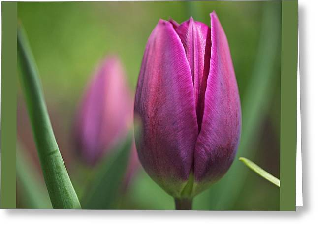 Young Purple Tulips Greeting Card by Rona Black
