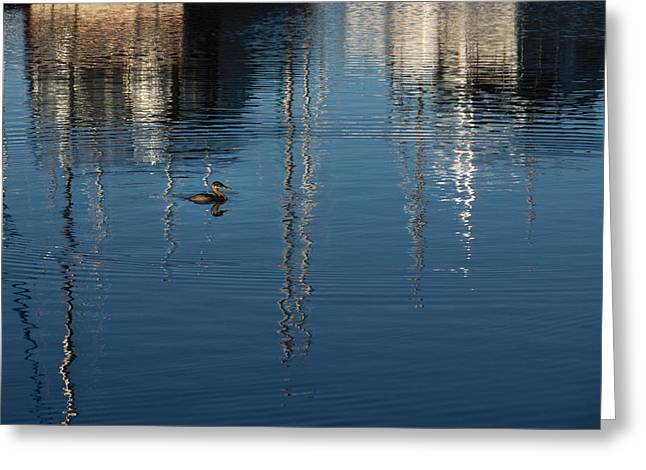 Water Fowl Greeting Cards - Young Red-Necked Grebe on Silver Greeting Card by Georgia Mizuleva