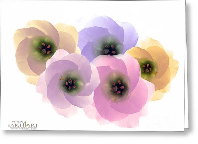 Mehran Akhzari Greeting Cards - Young s Dream Greeting Card by Mehran Akhzari