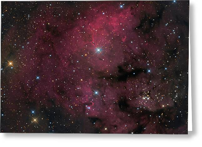 Young Stars Greeting Cards - Young Star-forming Complex Ngc 7822 Greeting Card by Michael Miller