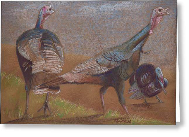 Meleagris Gallopavo Greeting Cards - Young Toms Greeting Card by Pam Little
