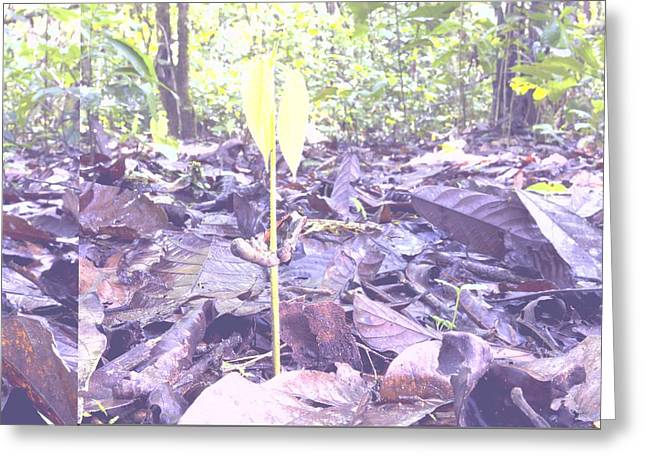 Sacha Greeting Cards - Young tree growing in a rain forest Greeting Card by Science Photo Library