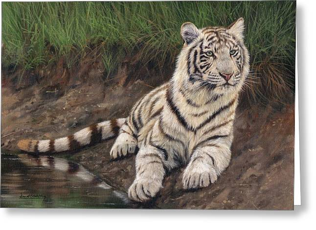 White Tiger Greeting Cards - Young White Tiger Greeting Card by David Stribbling