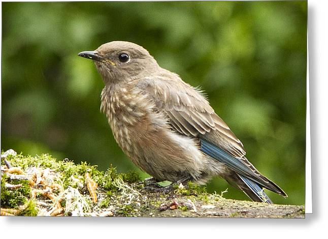 Feeding Birds Greeting Cards - Youngster Greeting Card by Jean Noren