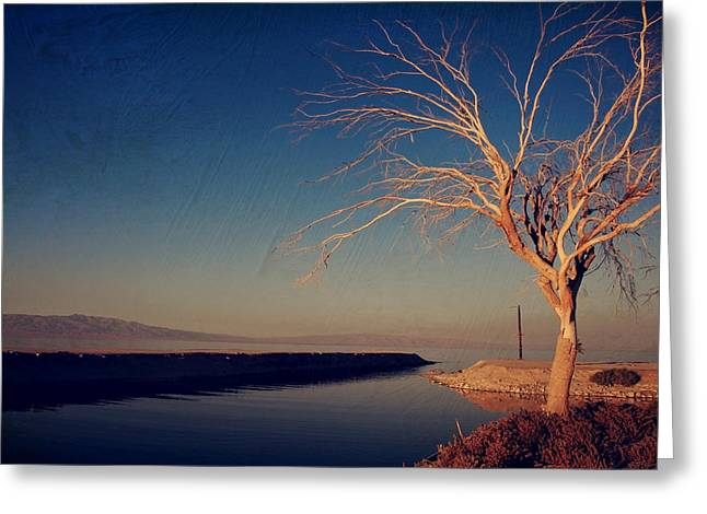 One Tree Greeting Cards - Your One and Only Greeting Card by Laurie Search