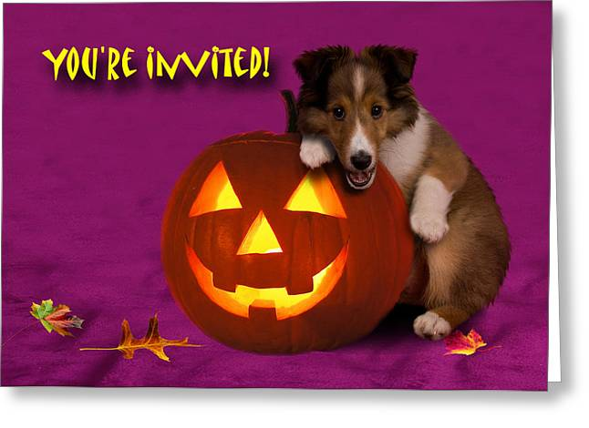 You're Invited Shetland Sheepdog Greeting Card by Jeanette K