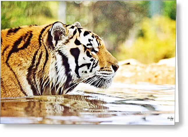 Mike The Tiger Greeting Cards - Youre Mine Greeting Card by Scott Pellegrin