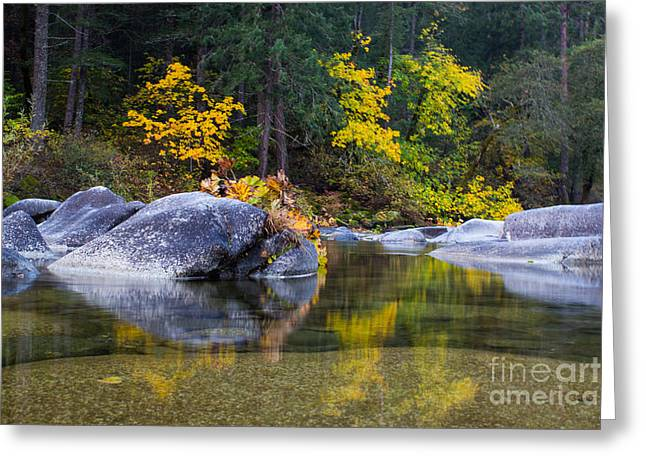 Trees Reflecting In Water Greeting Cards - Yuba River Gold Greeting Card by Leslie Wells