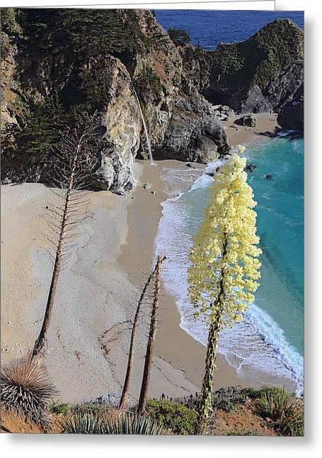 Big Sur Beach Greeting Cards - Yucca Flamentosa On McWay Falls Greeting Card by Viktor Savchenko