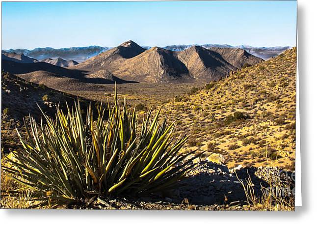 Yucca In High Deaert Greeting Card by Robert Bales