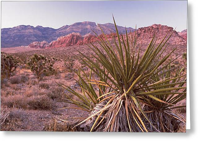 Red Rock Canyon Greeting Cards - Yucca Plant In A Desert, Red Rock Greeting Card by Panoramic Images