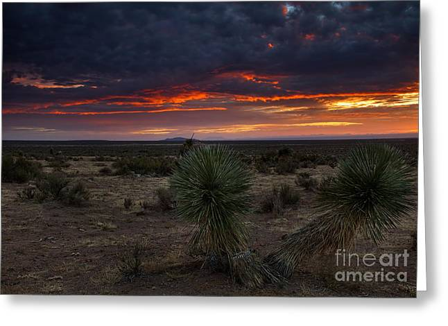 Yucca Sunset Greeting Card by Mike  Dawson