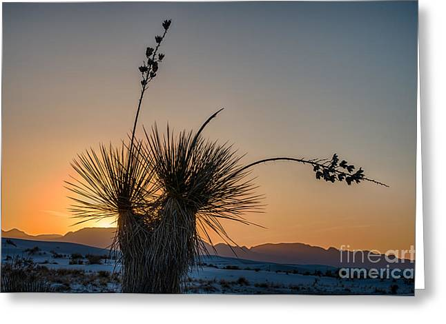 Ripples In The Sand Greeting Cards - Yucca sunset Greeting Card by Tod and Cynthia Grubbs