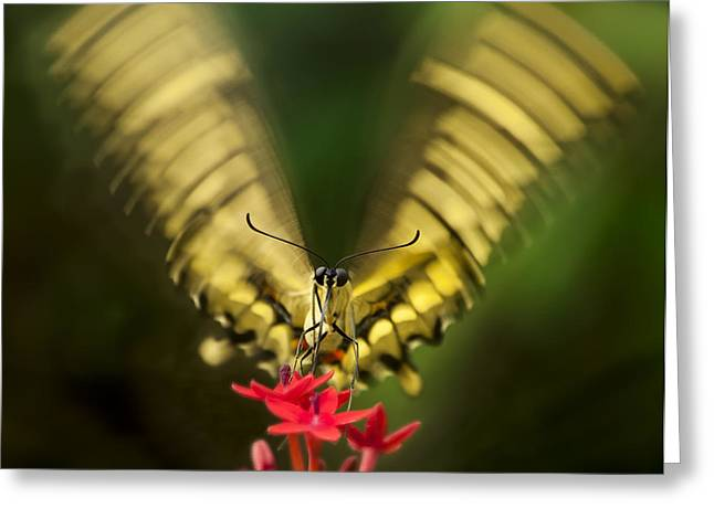 Butterfly In Motion Greeting Cards - Yum Greeting Card by Jennifer