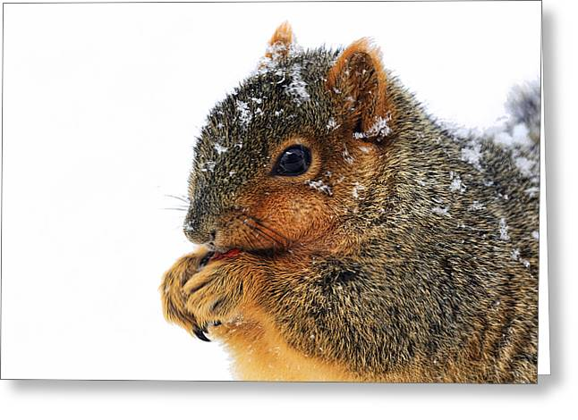 Eastern Fox Squirrel Greeting Cards - Yummy Greeting Card by Marcia Colelli