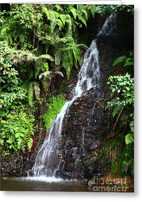Water Effect Greeting Cards - Yungas Waterfall Greeting Card by James Brunker