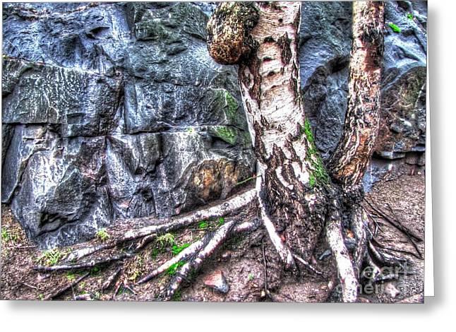 Old Pyrography Greeting Cards - YURY BASHKIN old tree Greeting Card by Yury Bashkin