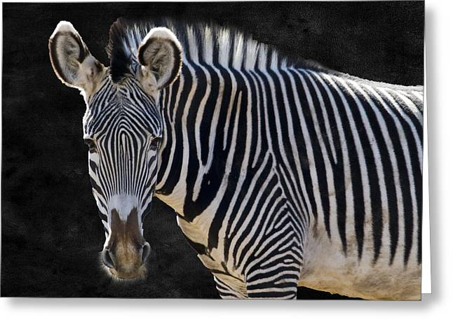 Captive Animals Greeting Cards - Z is for Zebra Greeting Card by Juli Scalzi