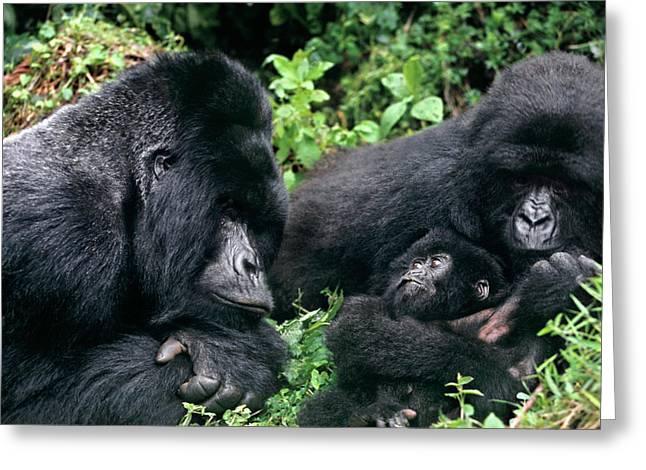 Zaire, Virungas National Park, Virungas Greeting Card by Jaynes Gallery