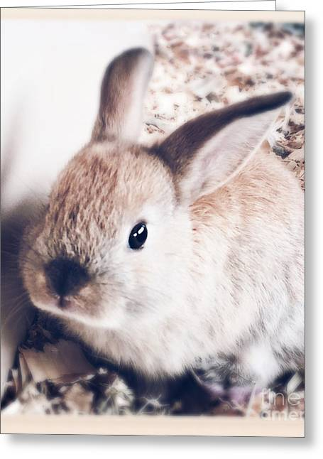 Bunny Greeting Cards - Zaki Greeting Card by Sharon Mau