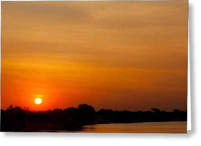 Tern Greeting Cards - Zambezi light Greeting Card by Alistair Lyne