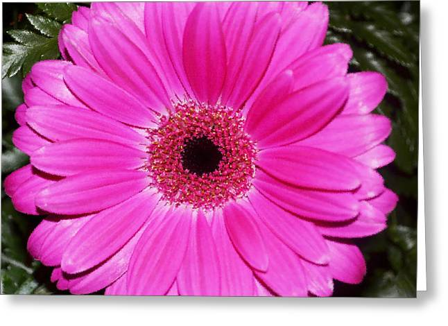 Zinnia Elegans Greeting Cards - Zany Zinnia Greeting Card by Luther   Fine Art