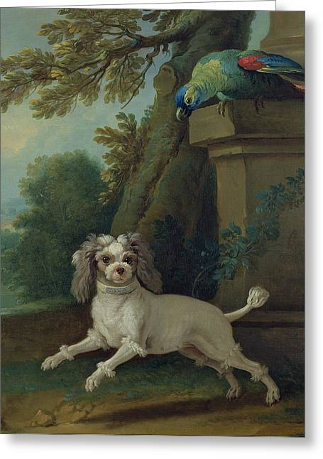 Preening Greeting Cards - Zaza, The Dog, C.1730 Oil On Canvas Greeting Card by Jean-Baptiste Oudry