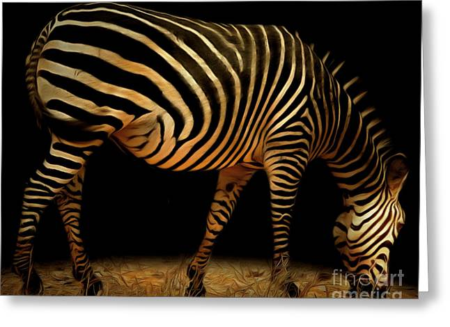 Zebra Grazing Greeting Cards - Zebra 20150210brun Greeting Card by Wingsdomain Art and Photography