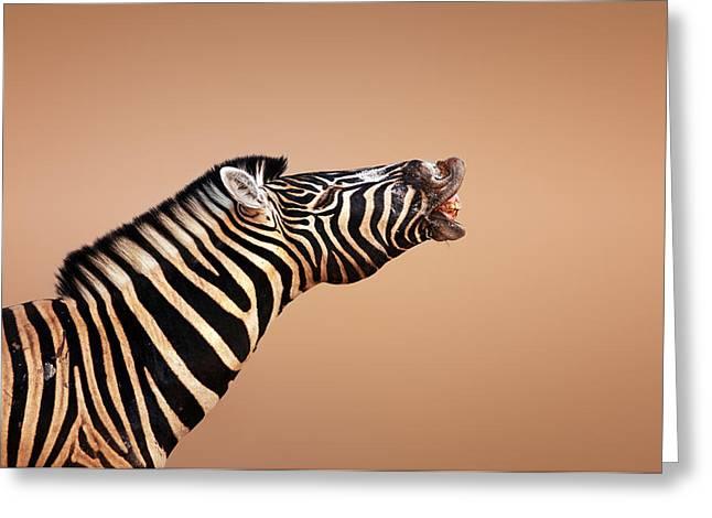zebra calling Greeting Card by Johan Swanepoel