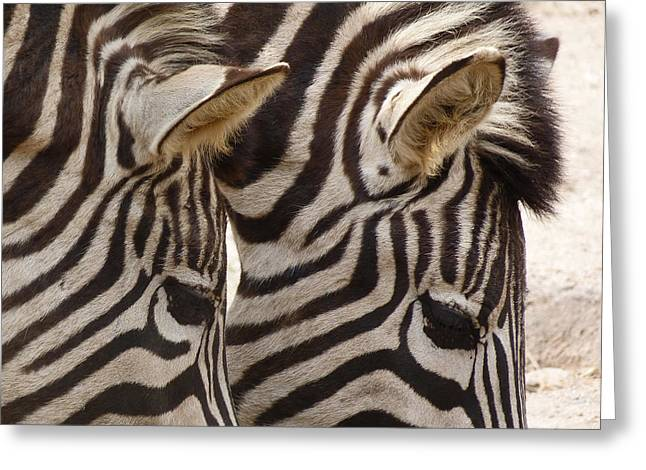 Saheed Greeting Cards - Zebra Double Greeting Card by Margaret Saheed