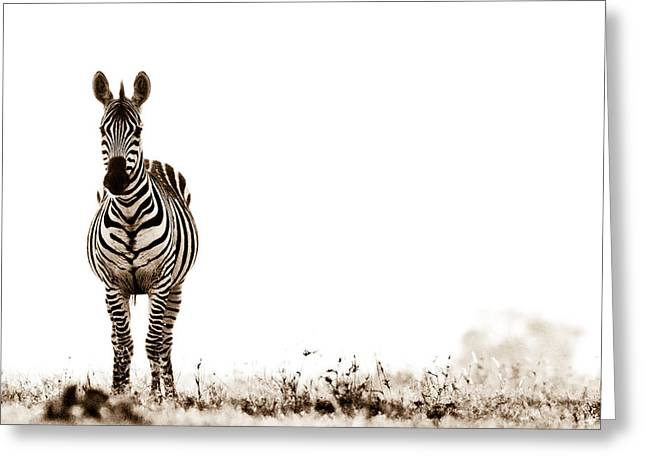 Out Of Africa Greeting Cards - Zebra Facing Forward Washed Out Sky Bw Greeting Card by Mike Gaudaur
